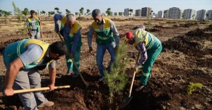 25 thousand saplings planted in Tahir Elçi City Forest
